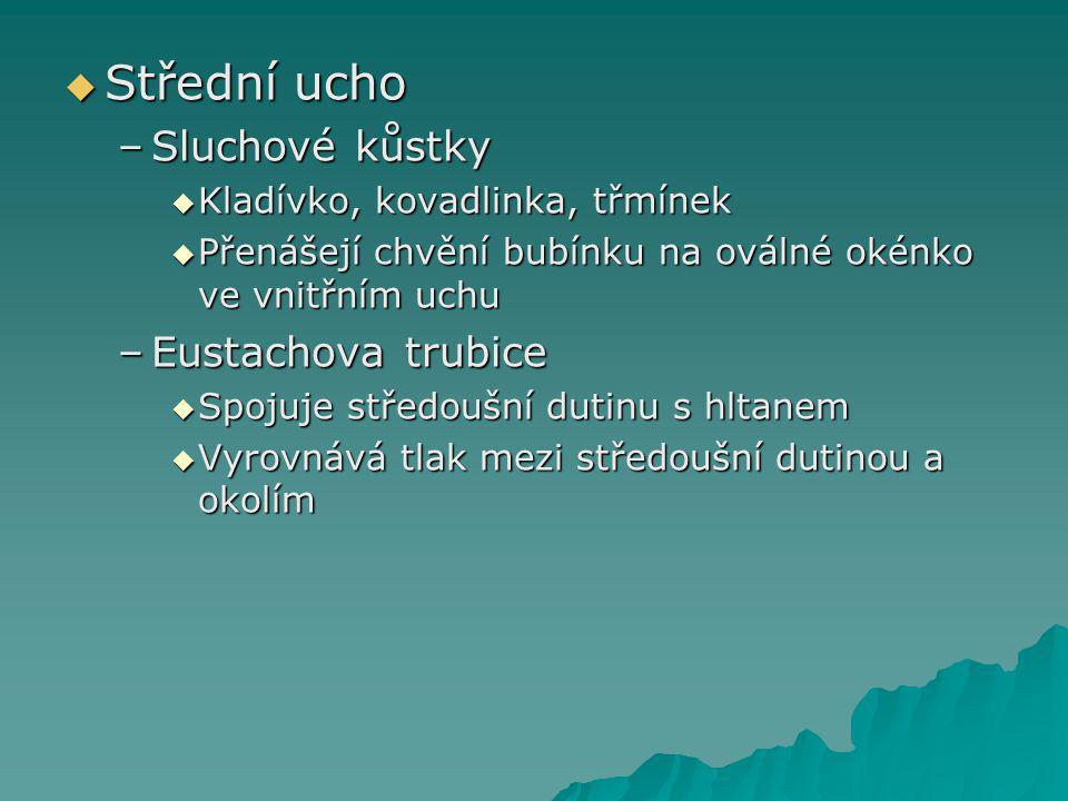  Střední ucho –Sluchové kůstky  Kladívko, kovadlinka, třmínek  Přenášejí chvění bubínku na oválné okénko ve vnitřním uchu –Eustachova trubice  Spo