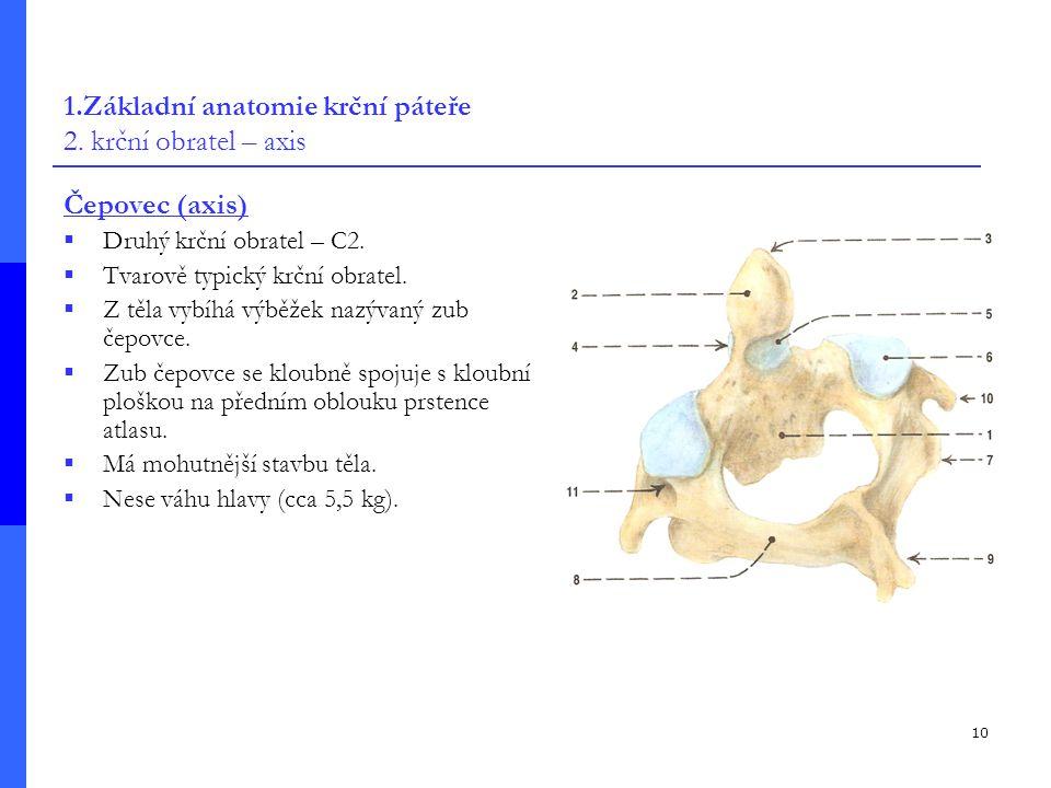 10 1.Základní anatomie krční páteře 2.