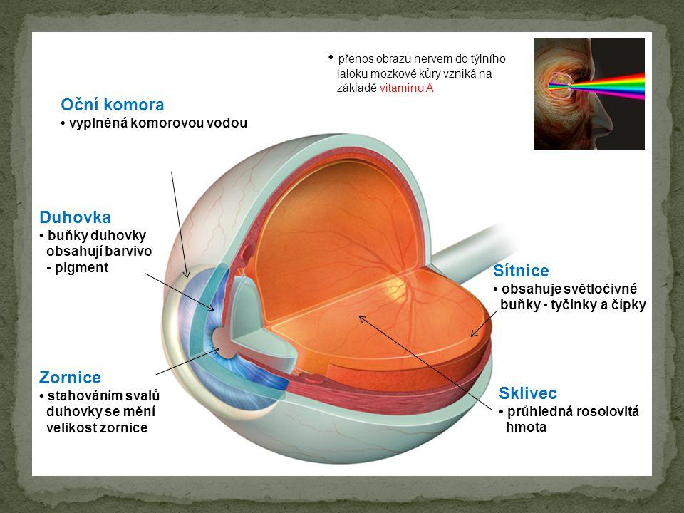Zornice stahováním svalů duhovky se mění velikost zornice Duhovka buňky duhovky obsahují barvivo - pigment Oční komora vyplněná komorovou vodou Sklive