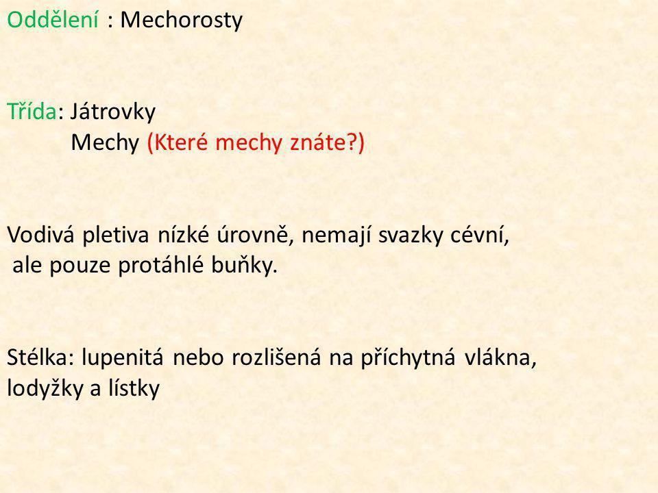Oddělení : Mechorosty Třída: Játrovky Mechy (Které mechy znáte?) Vodivá pletiva nízké úrovně, nemají svazky cévní, ale pouze protáhlé buňky.