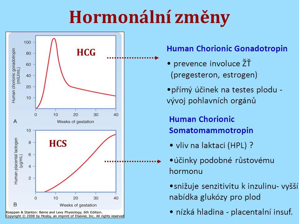 Hormonální změny HCG HCS Human Chorionic Gonadotropin prevence involuce ŽŤ (pregesteron, estrogen) přímý účinek na testes plodu - vývoj pohlavních orgánů Human Chorionic Somatomammotropin vliv na laktaci (HPL) .