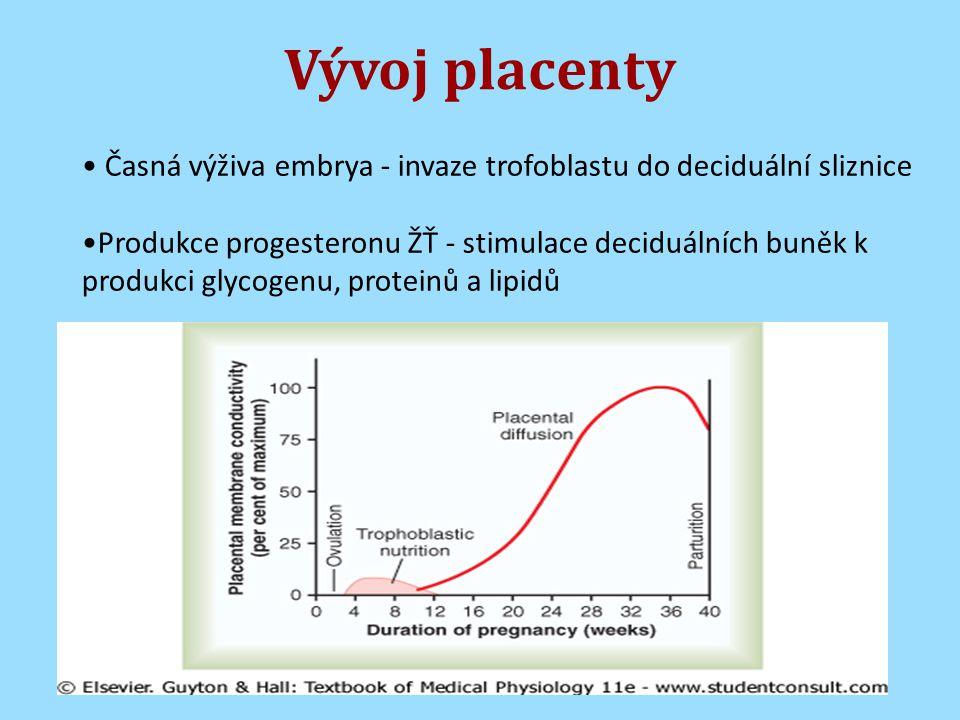 Vývoj placenty Časná výživa embrya - invaze trofoblastu do deciduální sliznice Produkce progesteronu ŽŤ - stimulace deciduálních buněk k produkci glycogenu, proteinů a lipidů