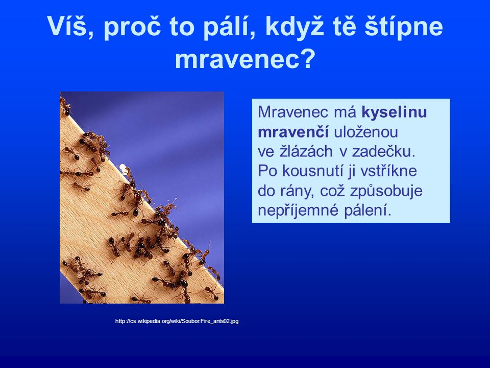 Víš, proč to pálí, když tě štípne mravenec? http://cs.wikipedia.org/wiki/Soubor:Fire_ants02.jpg Mravenec má kyselinu mravenčí uloženou ve žlázách v za