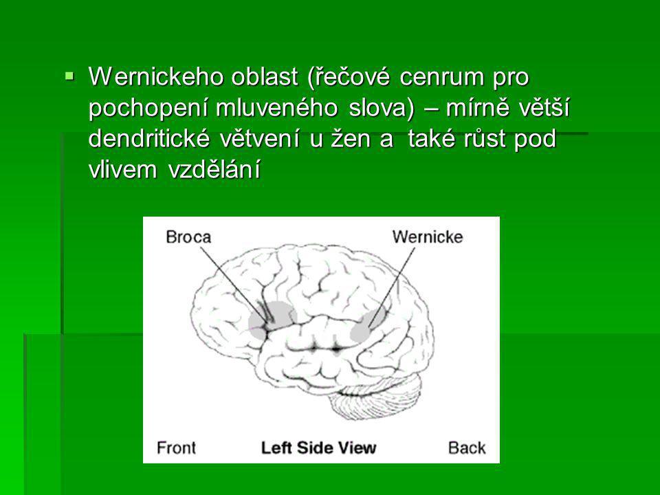  Mužský mozek je uspořádán více asymetricky  Větší levá mozková hemisféra: u mužů = lepší verbální schopnosti u žen = lepší neverbální schopnosti  Muži vynikají v mentálních rotacích představ  Pohled evoluční psychologie