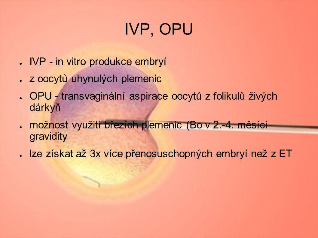 IVP, OPU ● IVP - in vitro produkce embryí ● z oocytů uhynulých plemenic ● OPU - transvaginální aspirace oocytů z folikulů živých dárkyň ● možnost využ
