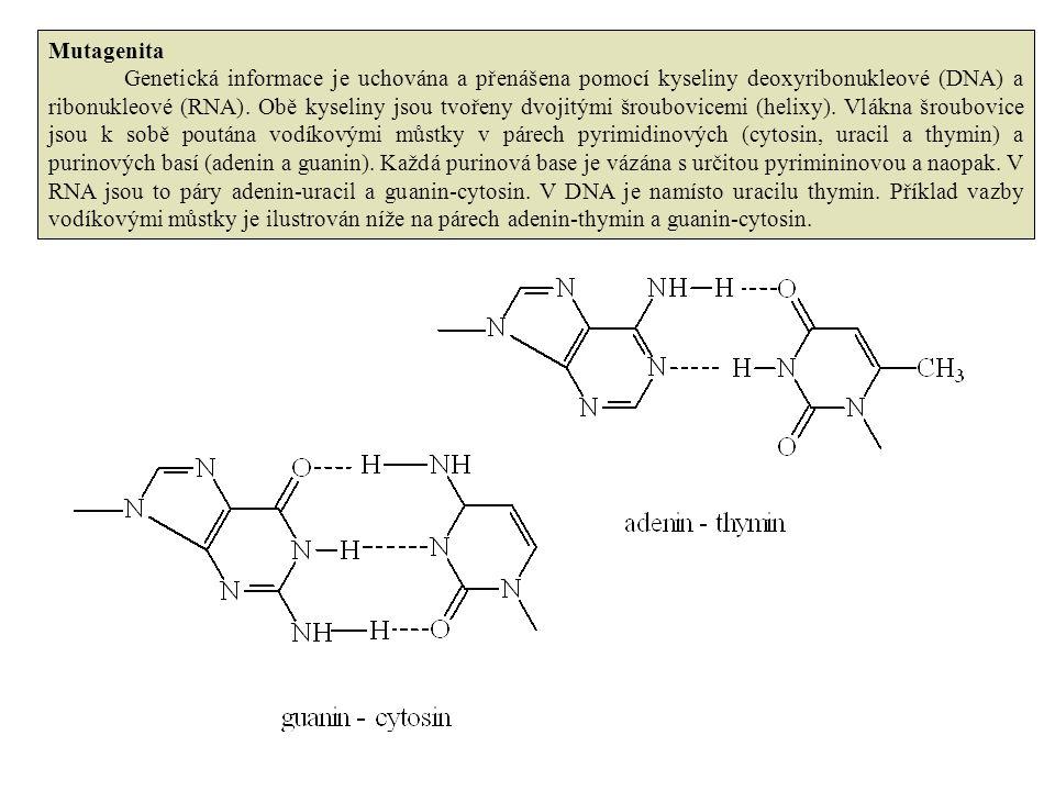 Mutagenita Genetická informace je uchována a přenášena pomocí kyseliny deoxyribonukleové (DNA) a ribonukleové (RNA). Obě kyseliny jsou tvořeny dvojitý