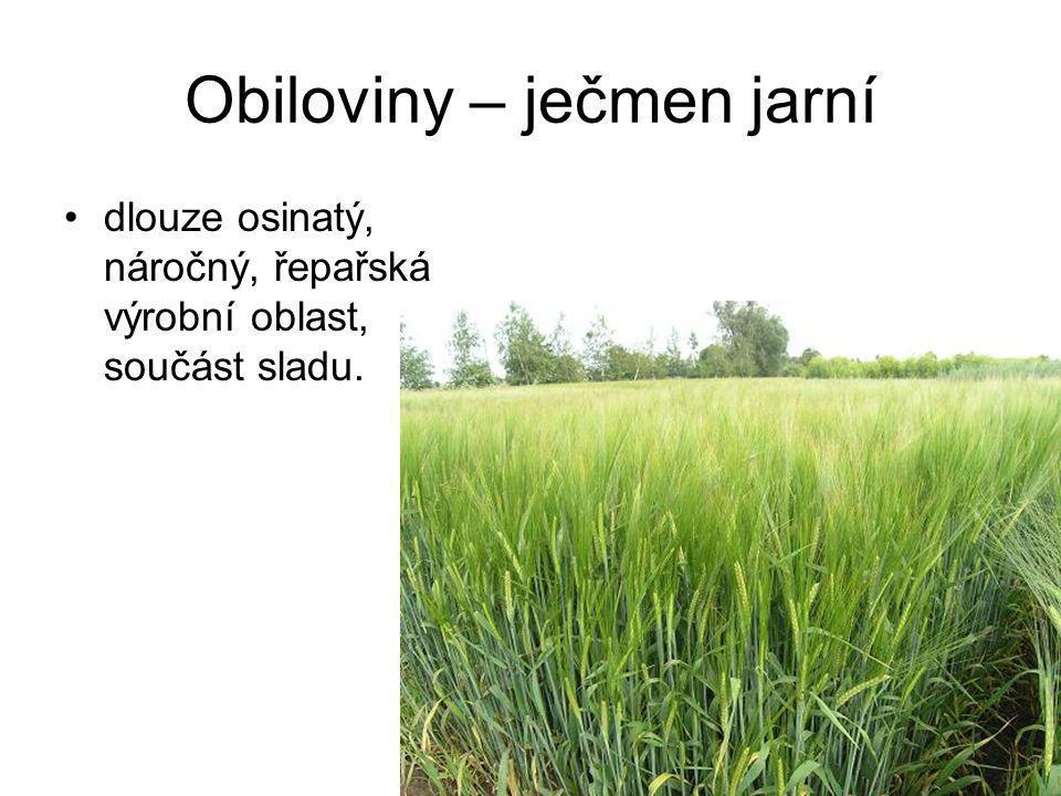 Olejniny – hořčice bílá vhodná strnisková meziplodina, krátká vegetační doba.