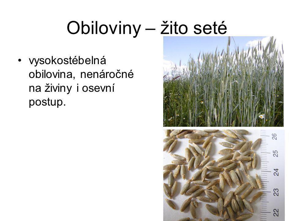 Luskoviny – soja luštinatá teplejší polohy pro pěstování na zrno, náhrada živočišné bílkoviny.