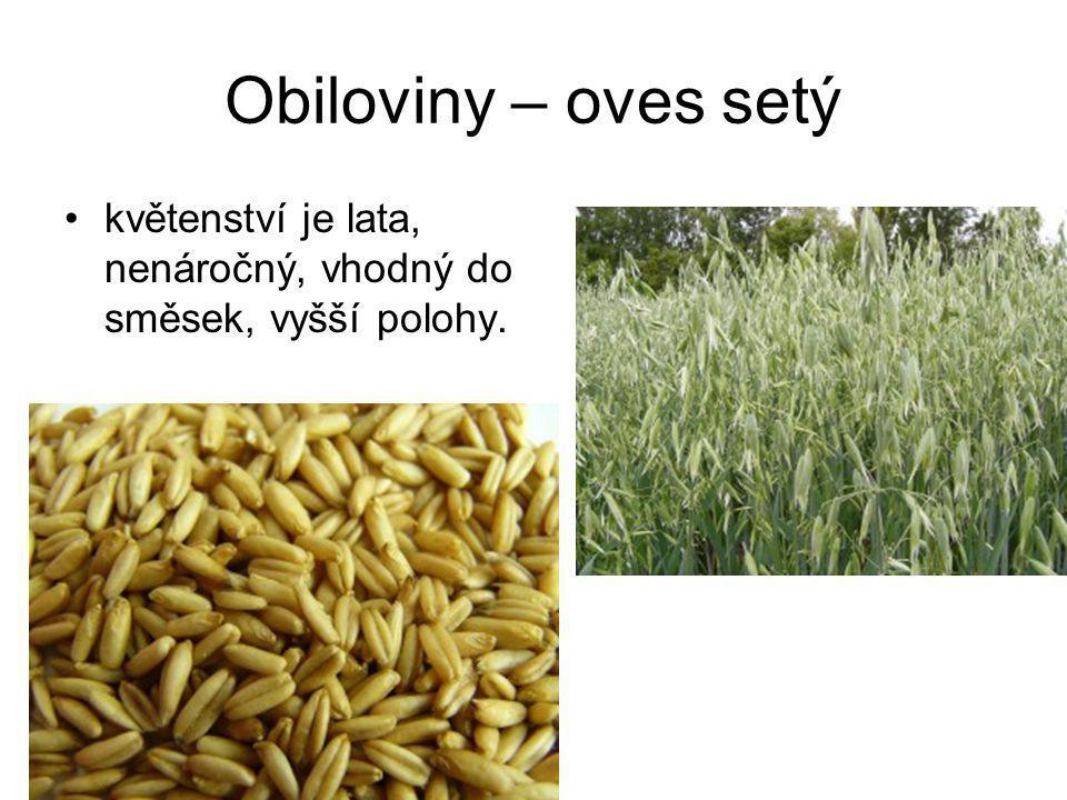 Obiloviny – kukuřice setá vhodná na siláž, širokořádková plodina, výnos 40-50 t zelené hmoty/ha.