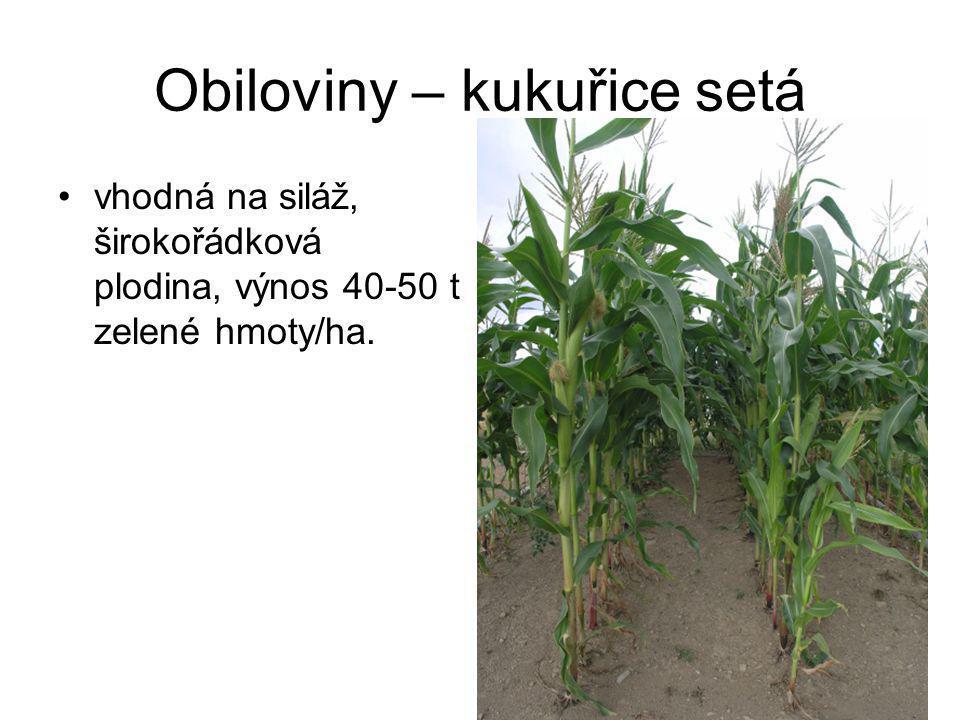 Přadné rostliny – konopí seté může být doplňkovým sortimentem, využití možné jako energetická plodina.