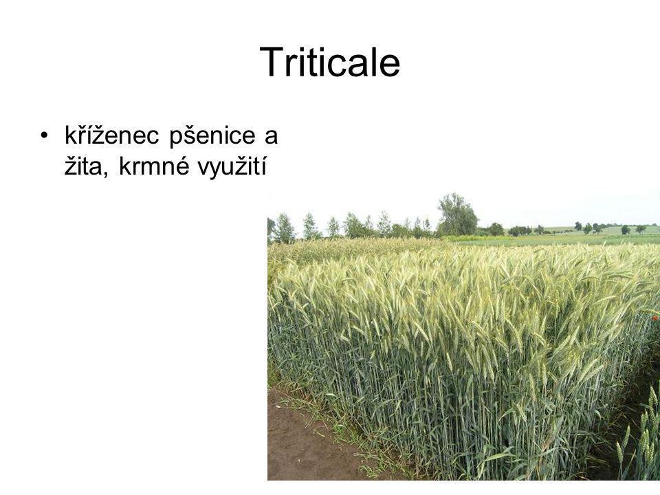 Pícniny – štírovník růžkatý travní porosty, medonosný.
