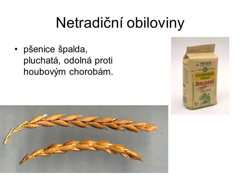 Olejniny – slunečnice roční k lisování olejů, siláž nebo zelené krmení ve směsi s kukuřicí.