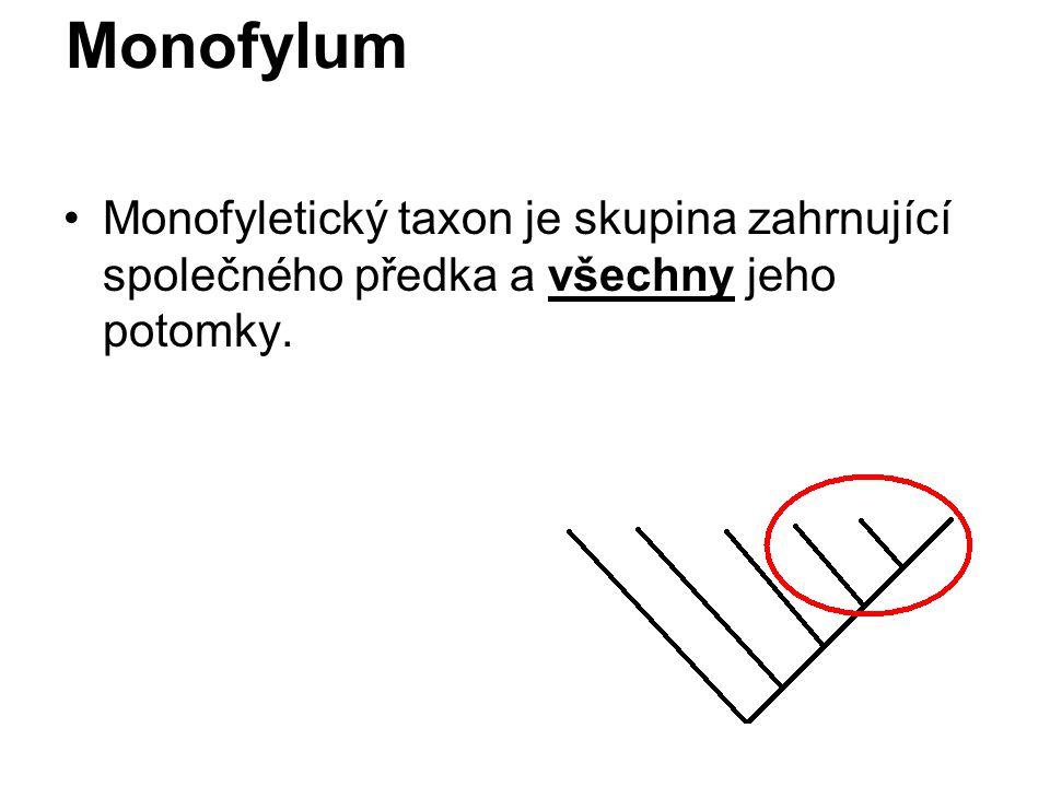 Monofylum Monofyletický taxon je skupina zahrnující společného předka a všechny jeho potomky.