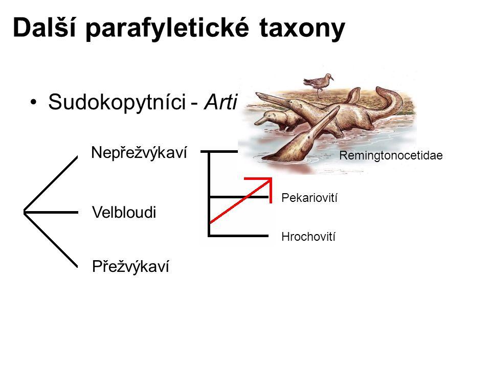 Další parafyletické taxony Sudokopytníci - Artiodactyla Nepřežvýkaví Velbloudi Přežvýkaví Prasatovití Pekariovití Hrochovití Remingtonocetidae