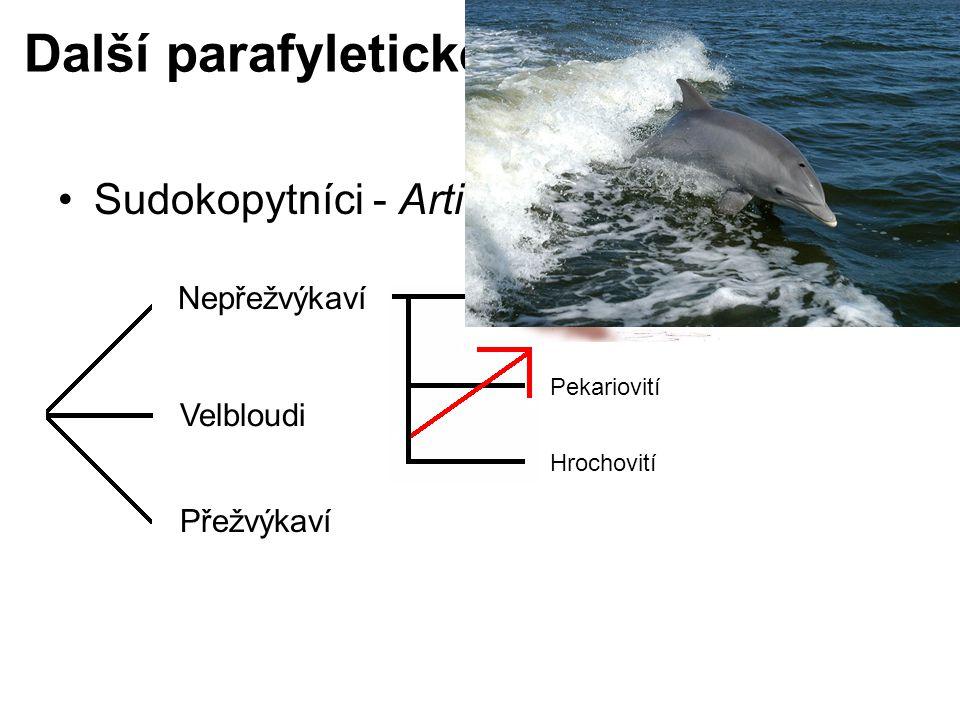 Další parafyletické taxony Sudokopytníci - Artiodactyla Nepřežvýkaví Velbloudi Přežvýkaví Prasatovití Pekariovití Hrochovití