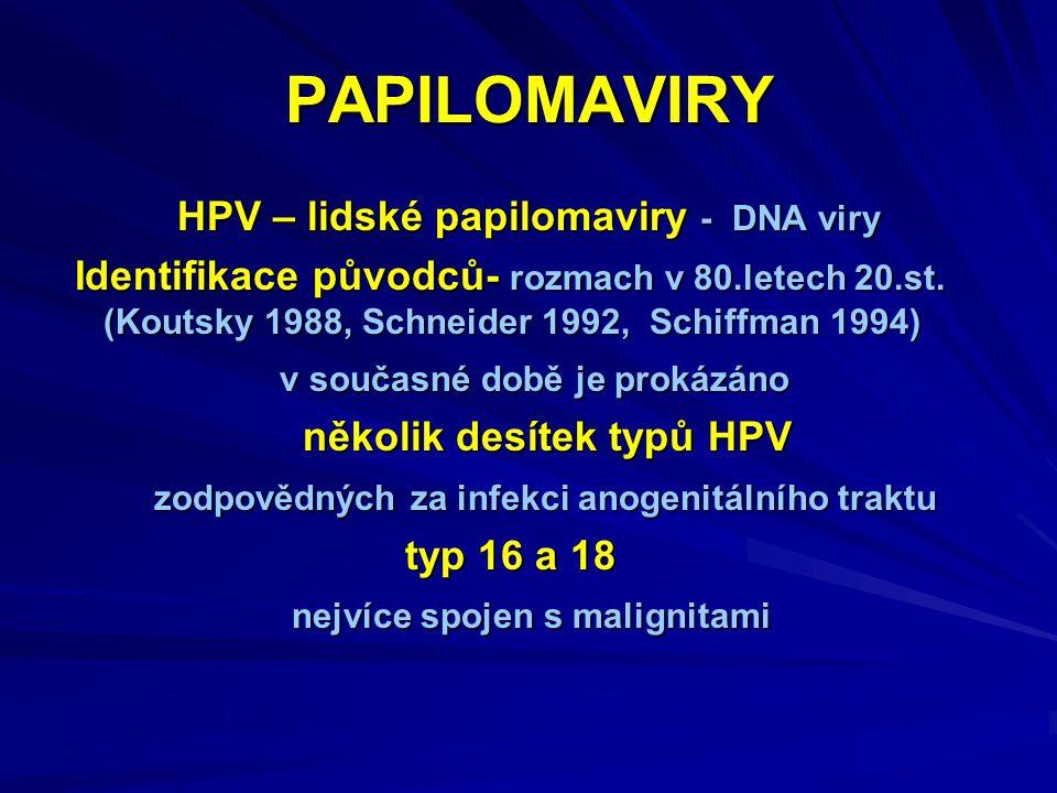 PAPILOMAVIRY HPV – lidské papilomaviry - DNA viry Identifikace původců- rozmach v 80.letech 20.st.