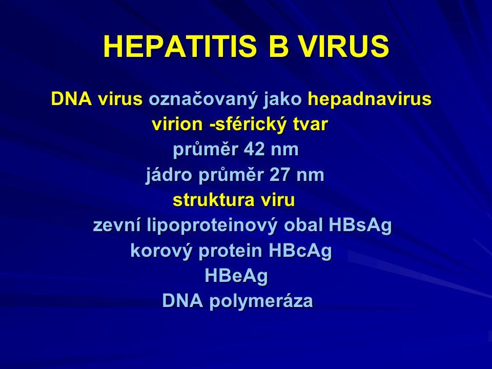 HEPATITIS B VIRUS DNA virus označovaný jako hepadnavirus DNA virus označovaný jako hepadnavirus virion -sférický tvar virion -sférický tvar průměr 42 nm průměr 42 nm jádro průměr 27 nm jádro průměr 27 nm struktura viru struktura viru zevní lipoproteinový obal HBsAg zevní lipoproteinový obal HBsAg korový protein HBcAg korový protein HBcAg HBeAg HBeAg DNA polymeráza DNA polymeráza