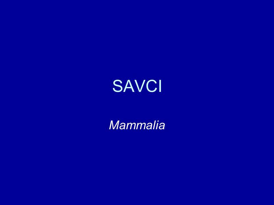 Primáti - poloopice stromoví - ovíjivý ocas dlouhé končetiny s drápy (x palec) protažený obličej, 36 zubů čich, pachové žlázy vlhká lysá ploška nosu (rhinarium) noční aktivita velké oči, tapetum lucidum Afrika, Madagaskar, JV Asie