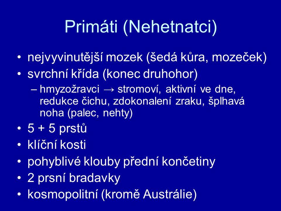 Primáti (Nehetnatci) nejvyvinutější mozek (šedá kůra, mozeček) svrchní křída (konec druhohor) –hmyzožravci → stromoví, aktivní ve dne, redukce čichu,