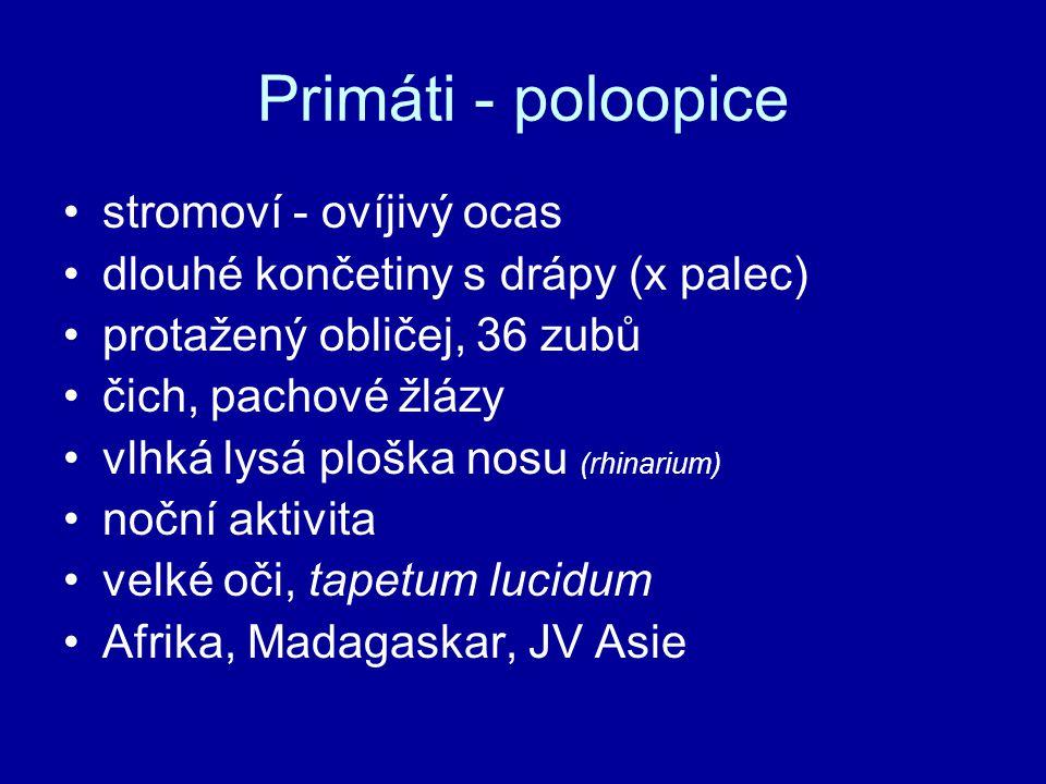 Primáti - poloopice stromoví - ovíjivý ocas dlouhé končetiny s drápy (x palec) protažený obličej, 36 zubů čich, pachové žlázy vlhká lysá ploška nosu (