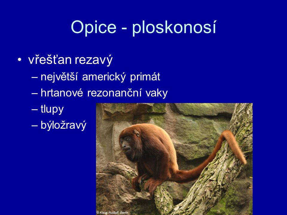 Opice - ploskonosí vřešťan rezavý –největší americký primát –hrtanové rezonanční vaky –tlupy –býložravý
