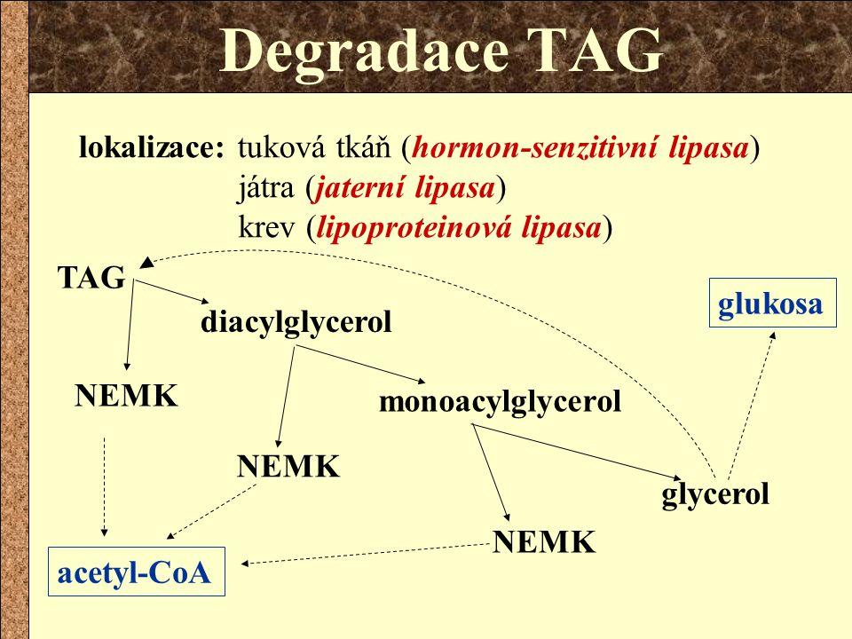 Degradace TAG lokalizace: tuková tkáň (hormon-senzitivní lipasa) játra (jaterní lipasa) krev (lipoproteinová lipasa) NEMK TAG diacylglycerol glycerol