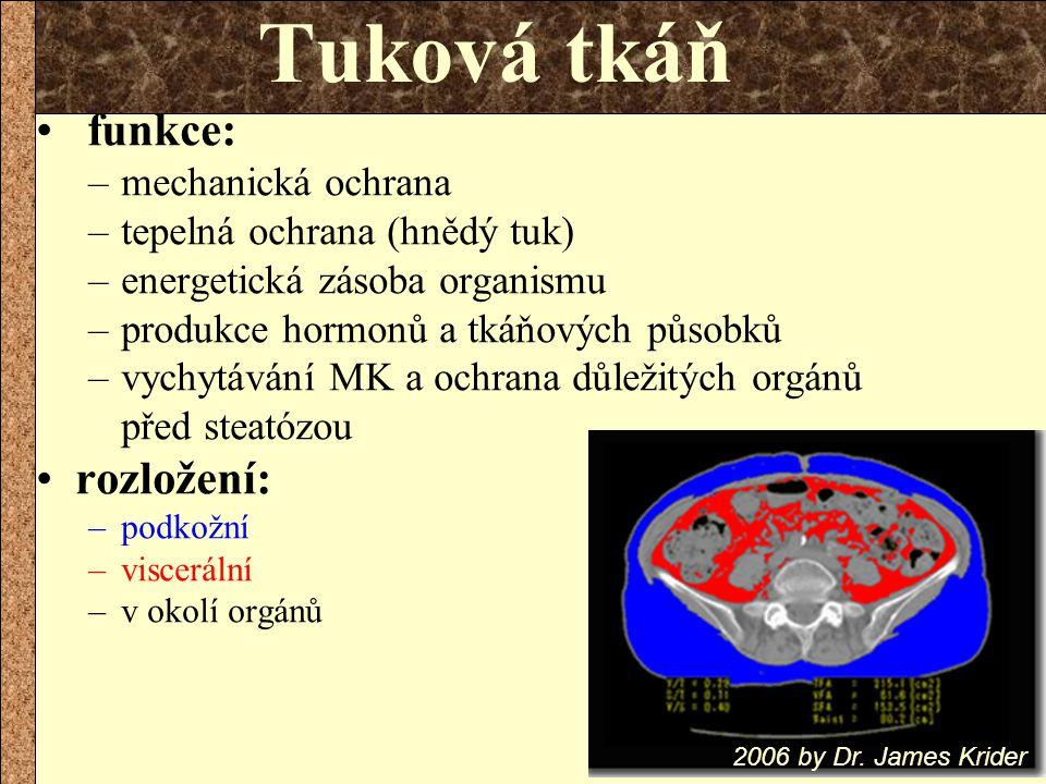funkce: –mechanická ochrana –tepelná ochrana (hnědý tuk) –energetická zásoba organismu –produkce hormonů a tkáňových působků –vychytávání MK a ochrana