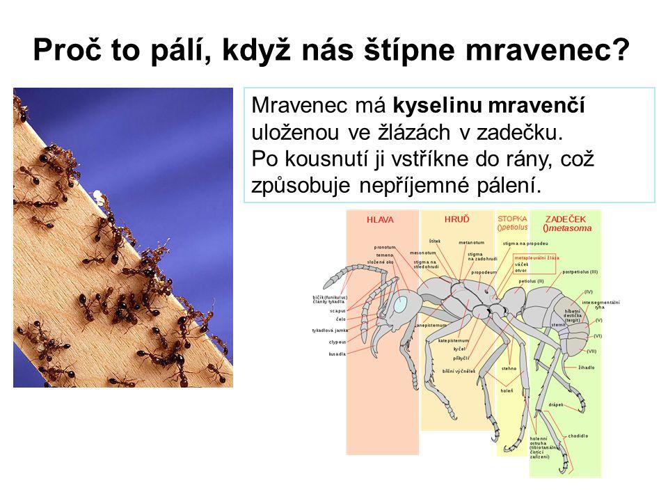 Proč to pálí, když nás štípne mravenec? Mravenec má kyselinu mravenčí uloženou ve žlázách v zadečku. Po kousnutí ji vstříkne do rány, což způsobuje ne