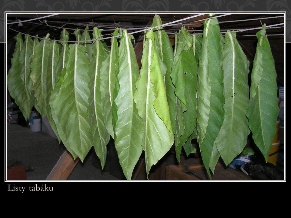 Listy tabáku