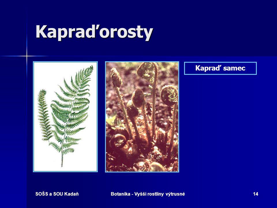 SOŠS a SOU KadaňBotanika - Vyšší rostliny výtrusné13 Rodozměna Kapraďorostů Prokel Kapraďorosty
