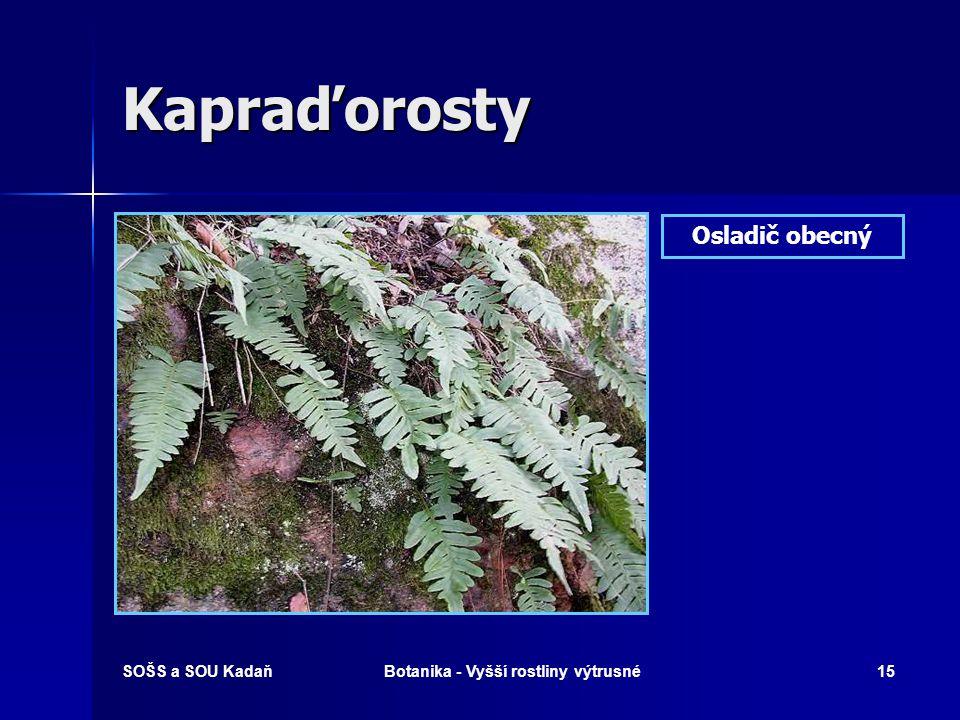 SOŠS a SOU KadaňBotanika - Vyšší rostliny výtrusné14 Kapraďorosty Kapraď samec