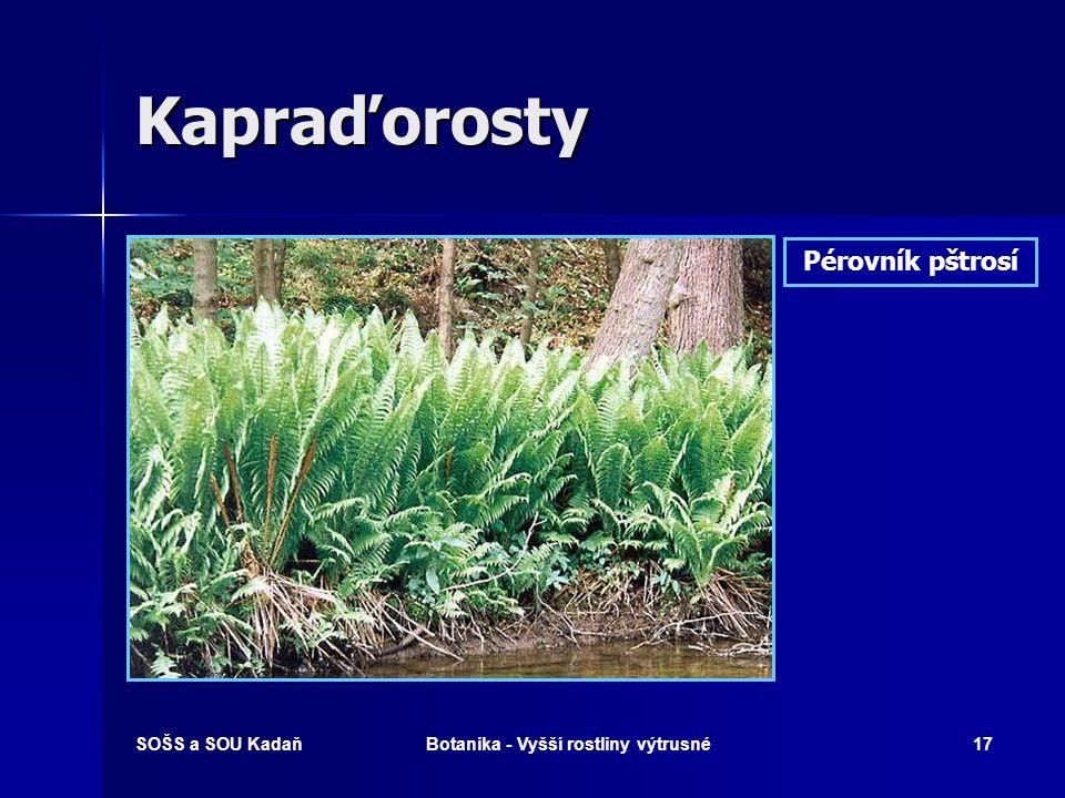 SOŠS a SOU KadaňBotanika - Vyšší rostliny výtrusné16 Kapraďorosty Osladič obecný Výtrusné kupky