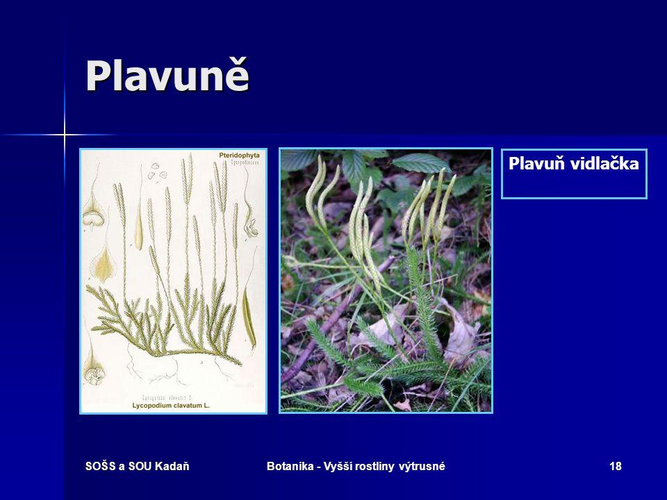 SOŠS a SOU KadaňBotanika - Vyšší rostliny výtrusné17 Kapraďorosty Pérovník pštrosí