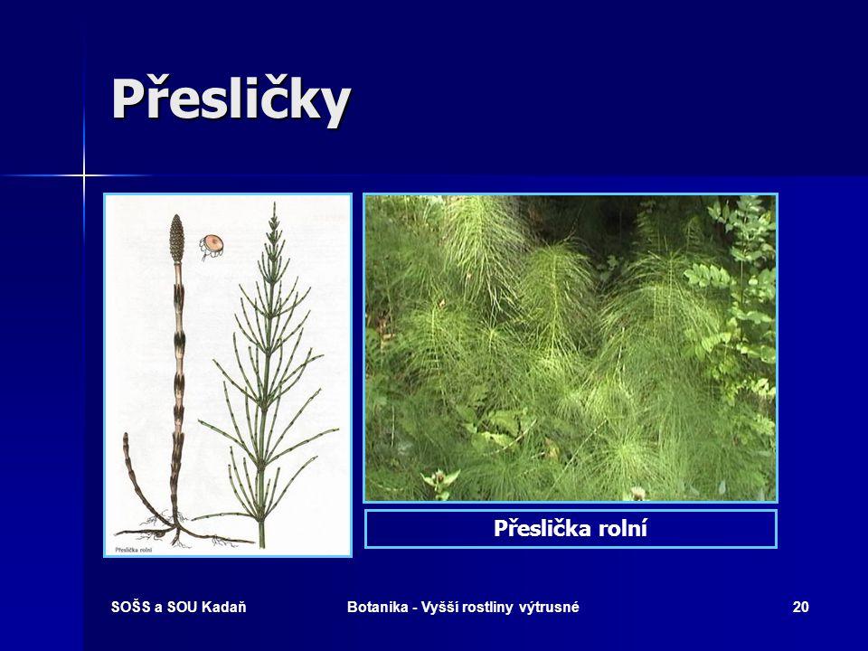 SOŠS a SOU KadaňBotanika - Vyšší rostliny výtrusné19 Plavuň vidlačka – léčivka V lidovém léčitelství, zejména v severských státech, se používá plavuňo