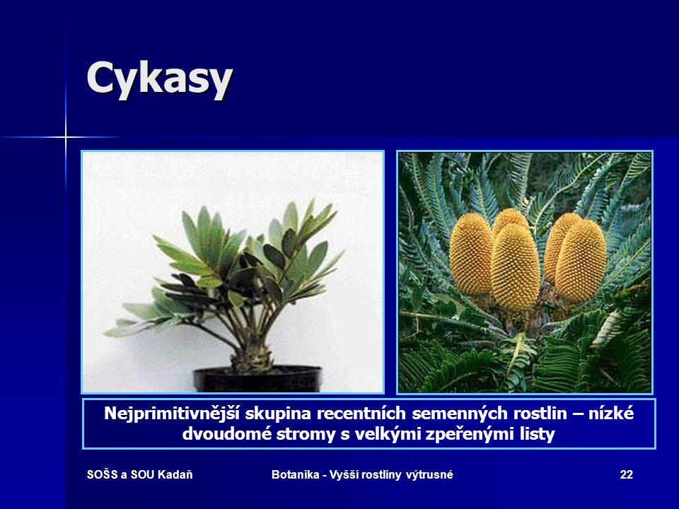 SOŠS a SOU KadaňBotanika - Vyšší rostliny výtrusné21 Přeslička rolní - léčivka Při prochladnutí měchýře s křečovitými bolestmi. Při prochladnutí měchý