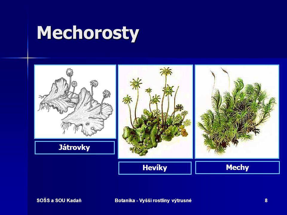SOŠS a SOU KadaňBotanika - Vyšší rostliny výtrusné7 Rodozměna - mechorostů Gametofyt – nepohlavní generace (2) Gametofyt – nepohlavní generace (2) Spo