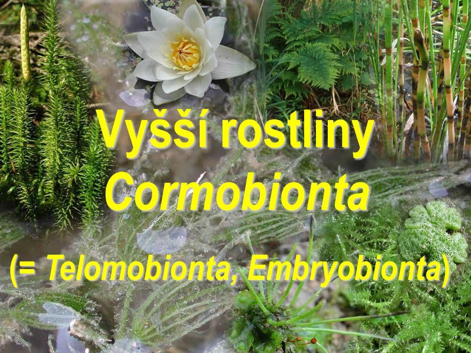 Vyšší rostliny Cormobionta ( = Telomobionta, Embryobionta )