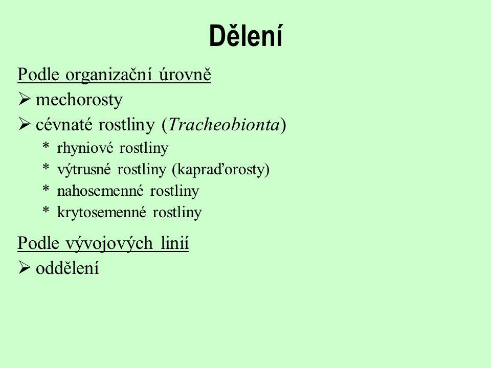 Dělení Podle organizační úrovně  mechorosty  cévnaté rostliny (Tracheobionta) *rhyniové rostliny *výtrusné rostliny (kapraďorosty) *nahosemenné rost