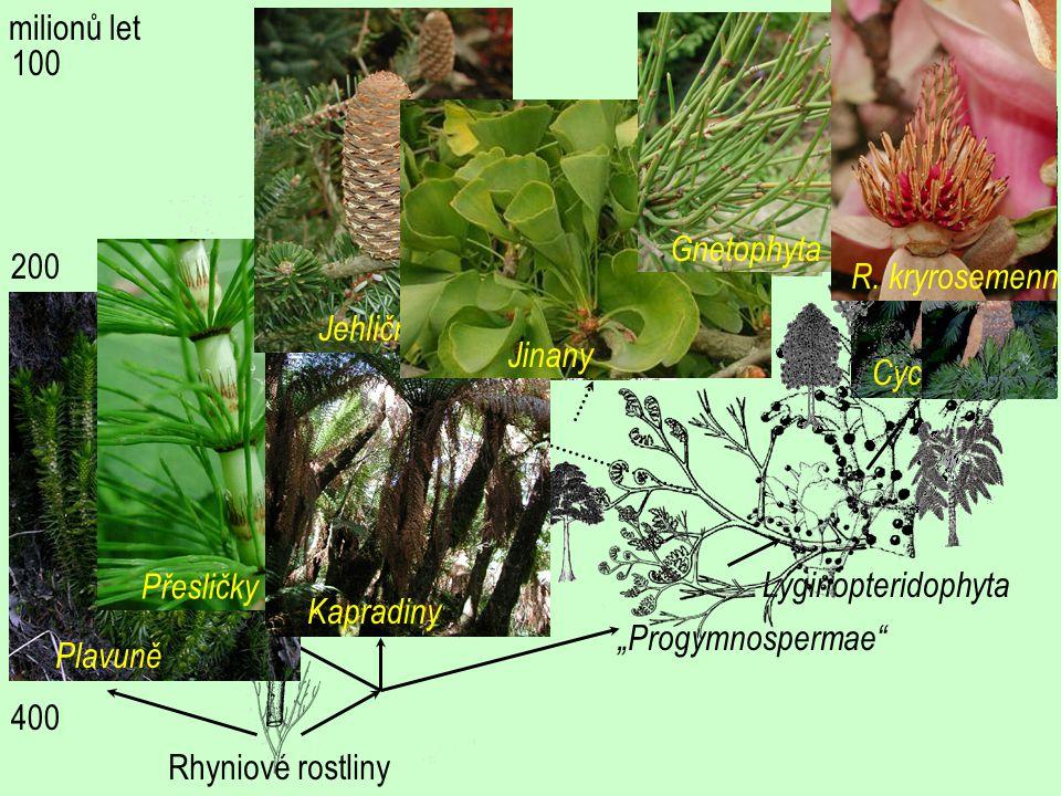 """Cycadophyta Lyginopteridophyta """"Progymnospermae"""" Rhyniové rostliny 400 300 200 100 milionů let Plavuně Přesličky Kapradiny Jehličnany Jinany Gnetophyt"""