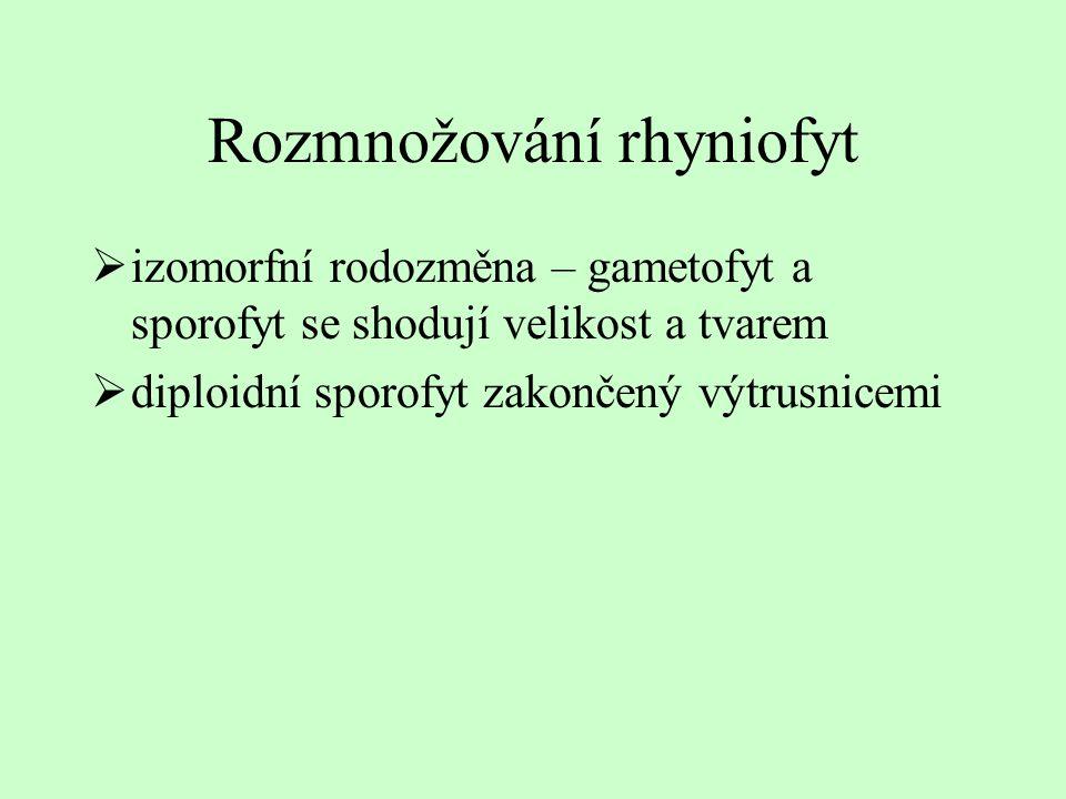 Rozmnožování rhyniofyt  izomorfní rodozměna – gametofyt a sporofyt se shodují velikost a tvarem  diploidní sporofyt zakončený výtrusnicemi