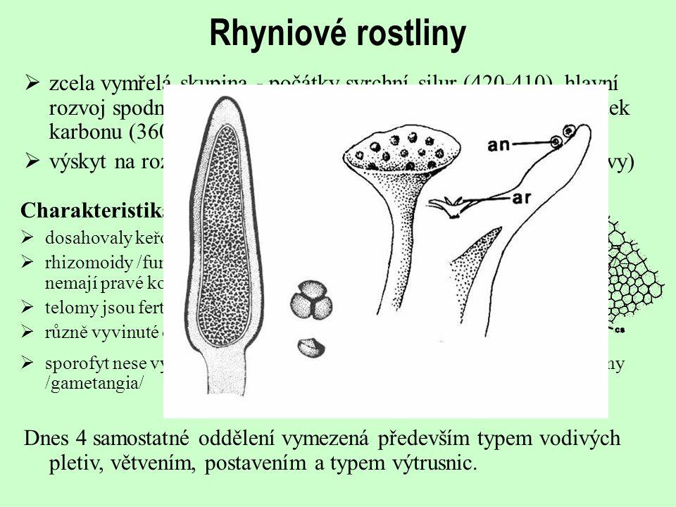 Rhyniové rostliny  zcela vymřelá skupina - počátky svrchní silur (420-410), hlavní rozvoj spodní devon (410-390) a nejpokročilejší typy až počátek ka
