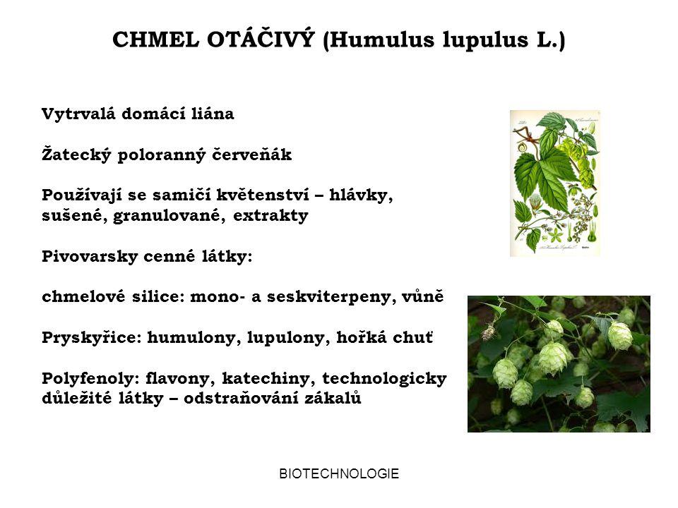 CHMEL OTÁČIVÝ (Humulus lupulus L.) BIOTECHNOLOGIE Vytrvalá domácí liána Žatecký poloranný červeňák Používají se samičí květenství – hlávky, sušené, granulované, extrakty Pivovarsky cenné látky: chmelové silice: mono- a seskviterpeny, vůně Pryskyřice: humulony, lupulony, hořká chuť Polyfenoly: flavony, katechiny, technologicky důležité látky – odstraňování zákalů