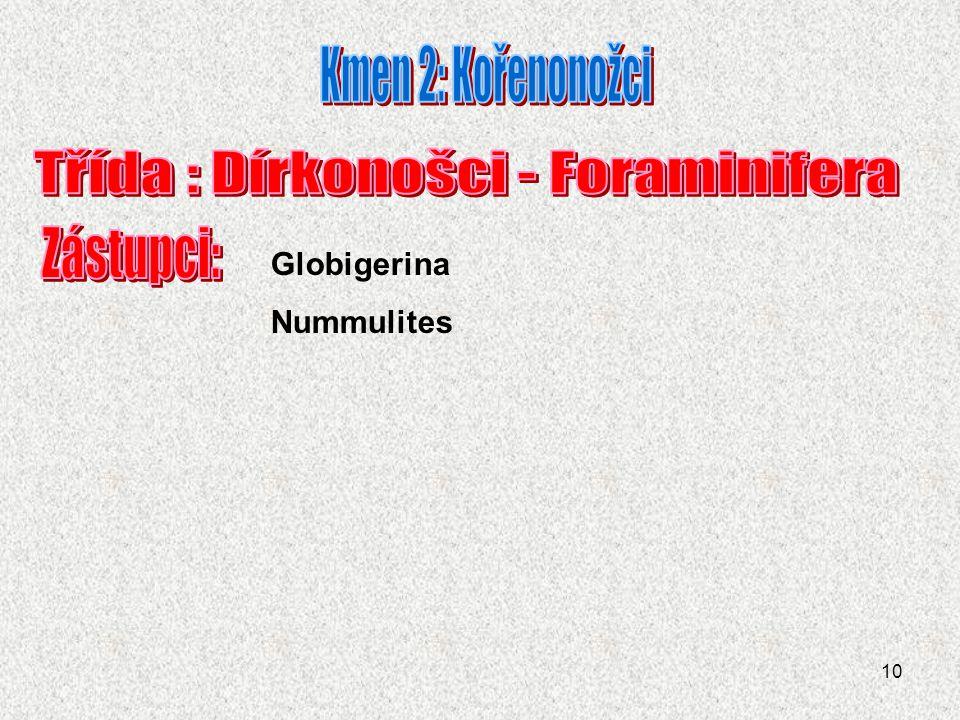 10 Globigerina Nummulites