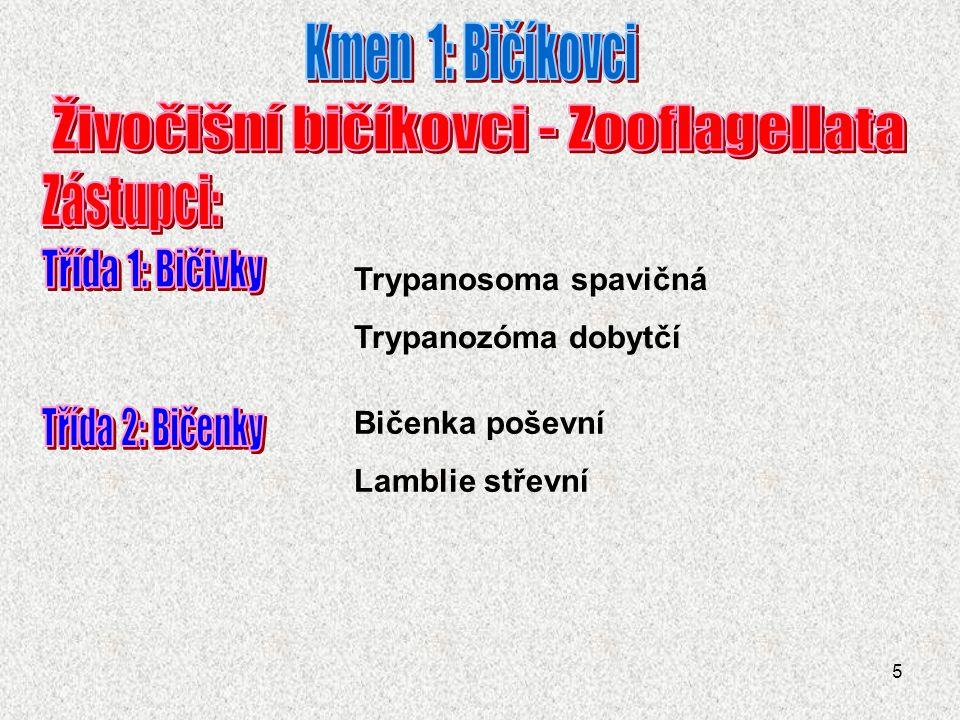 5 Trypanosoma spavičná Trypanozóma dobytčí Bičenka poševní Lamblie střevní