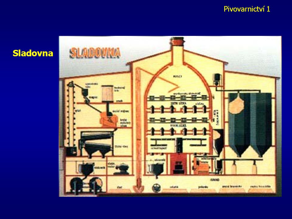 Pivovarnictví 1 Odkličování a drcení Odklíčení = odstranění kořínků a klíčků (tzv. sladový květ) hotový slad se ještě 6 týdnů nechá odležet v chlazený