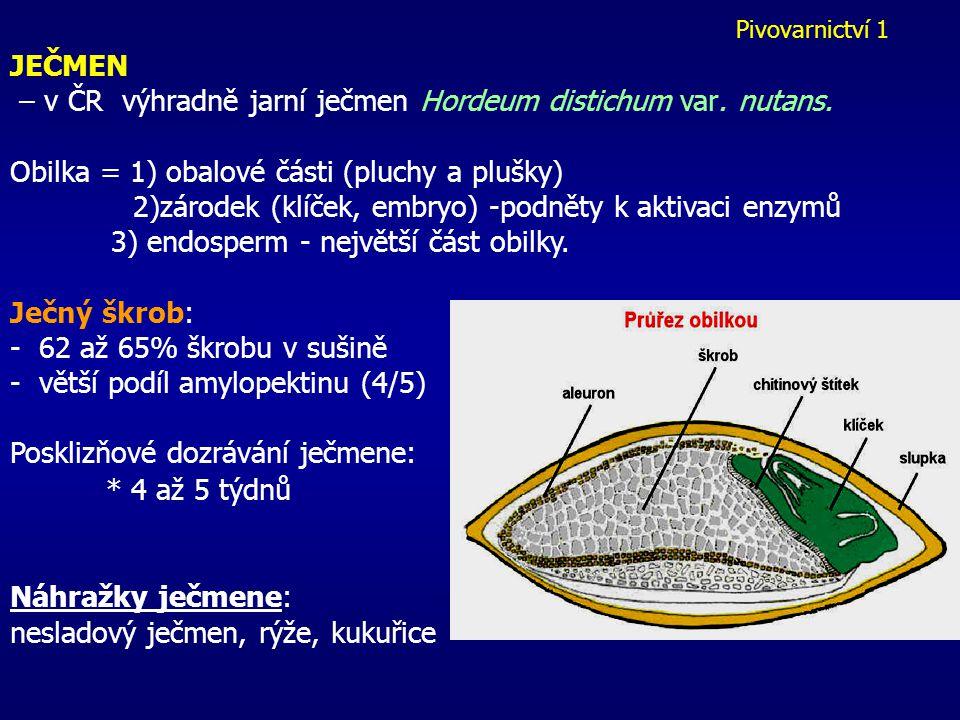 Pivovarnictví 1 JEČMEN – v ČR výhradně jarní ječmen Hordeum distichum var.