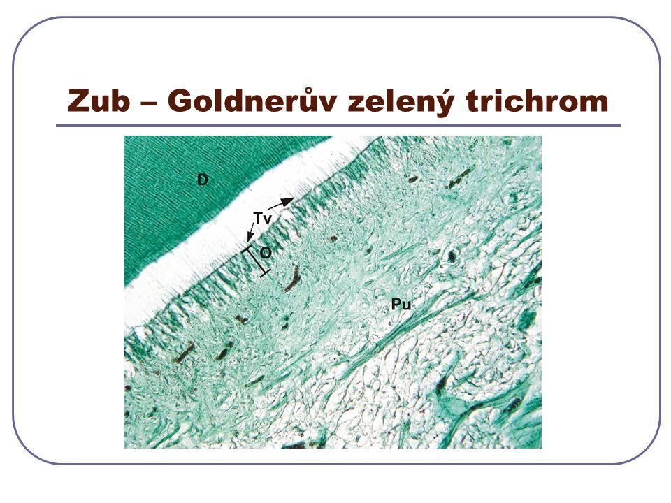 Zub – Goldnerův zelený trichrom