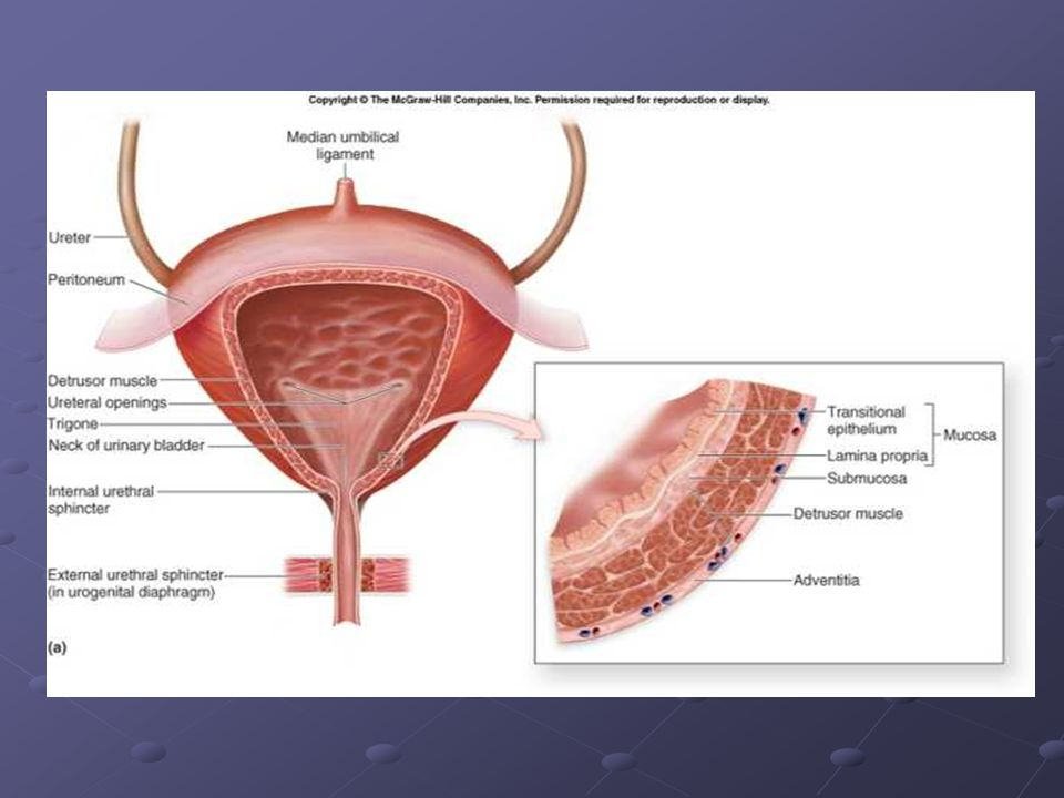 Intervenční radiologie Vaskulární intervence PTRA PTRA Embolizace Embolizace Nevaskulární intervence Perkutánní nefrostomie Perkutánní nefrostomie Perkutánní extrakce konkrementu Perkutánní extrakce konkrementu Drenáž Drenáž Biopsie Biopsie RFA RFA