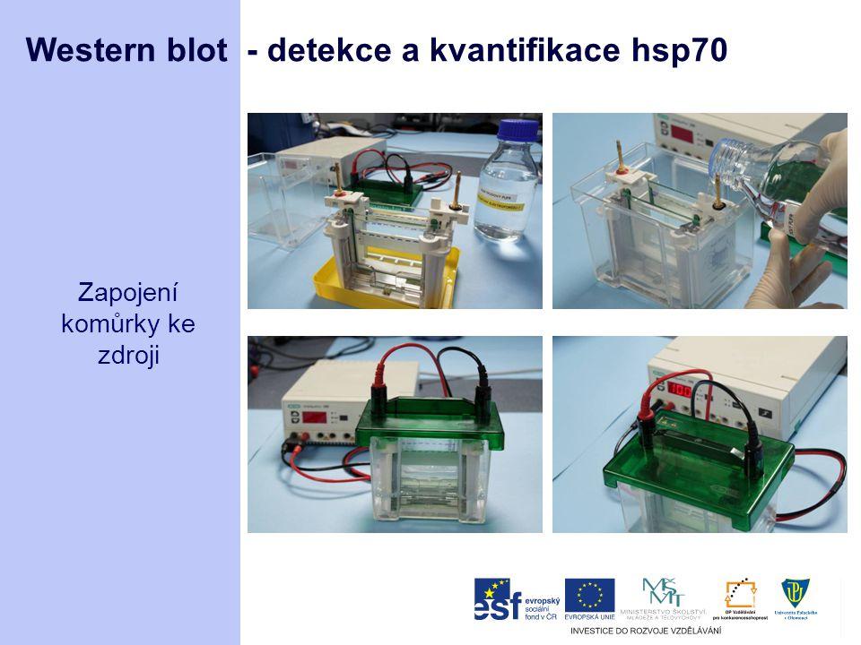 Western blot - detekce a kvantifikace hsp70 Zapojení komůrky ke zdroji