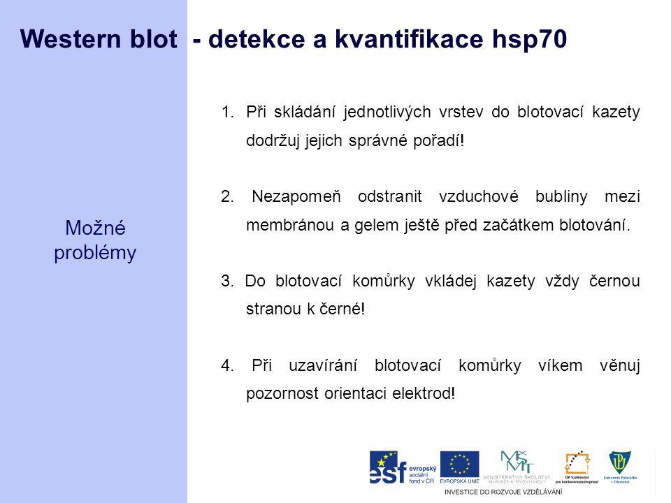 Western blot - detekce a kvantifikace hsp70 Možné problémy 1.Při skládání jednotlivých vrstev do blotovací kazety dodržuj jejich správné pořadí! 2. Ne